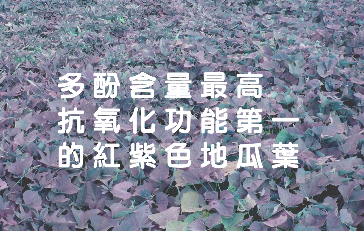 世界唯一的地瓜葉茶為何選用紅紫色地瓜葉大解密